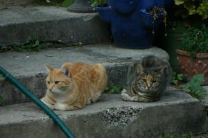 Katzen lieben unseren Garten