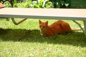 Schnuppus unter der Gartenliege
